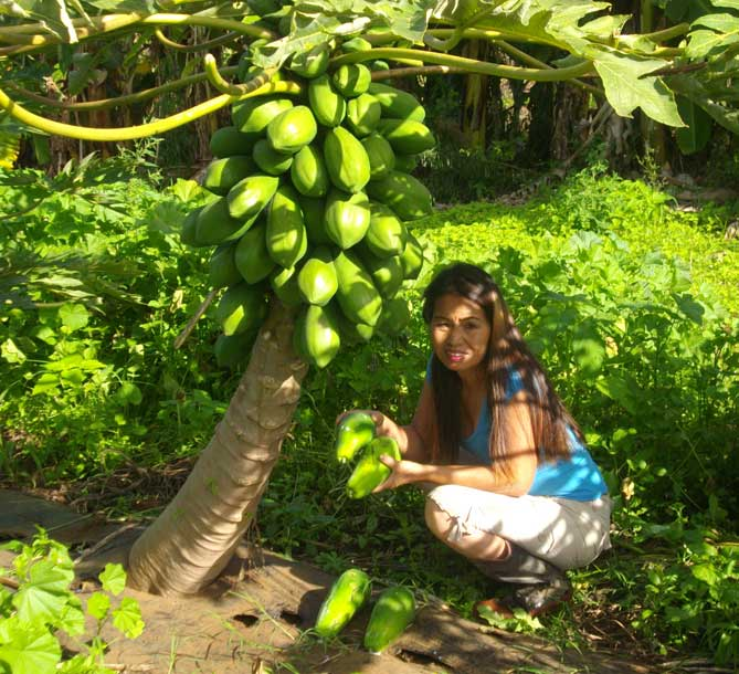 Nui with papaya tree at Maui Nui Farm